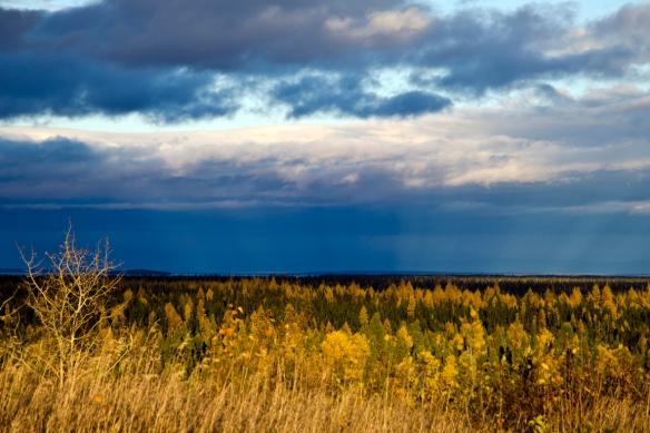 Dominique Hurley_Labrador_North West River_DLH_9580